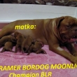Matka:CH BLR AGRAMER BORDOG MOONLIGHT